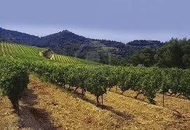 Rhone wijn 1