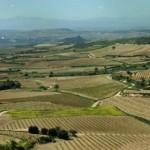de rioja wijngaarden in spanje