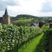 limburg wijn