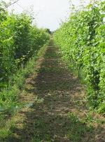 avitera - de biologische wijngaard