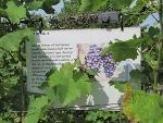 avitera - wijnwandelpad in de achterhoek 2