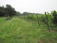 wijngoed elanova 4