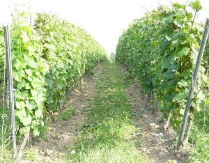 wijngoed thorn P1030592