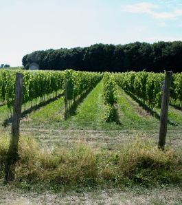 Wijngaard St. Martinus - Villare