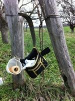 Wijngoed Hegyem in Hongarije de druivenranken