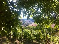 Wijngoed Hegyem in Hongarije, de omgeving