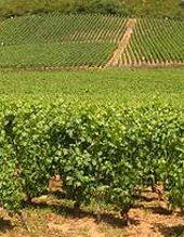 Regering wil de wijngaarden van Bourgogne en Champagne op de UNESCO lijst