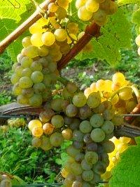 wijngaard erve wisselink
