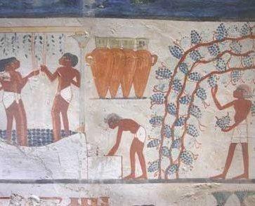 Sahara Vineyards – Egypt 2