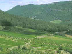wijngaarden in de Languedoc Roussilon