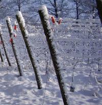 winter op wijngaard reeborgesch