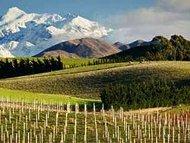 druivenrassen van Nieuw Zeeland