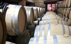 Waar let je op bij het kopen van een wijnkoelkast?