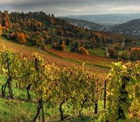 bulgarije, wijnland