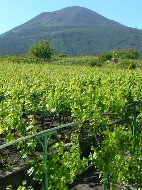 campanië wijngaard met de vesuvius