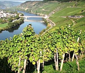 duitsland, moezel, wijngebied