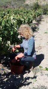 Column – Karen Haanstra – Oktober: de marc moet uit de wijn