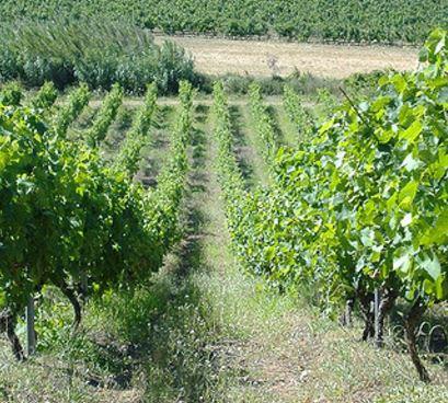wijnjaren, belangrijk om goede wijn te maken