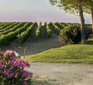 wijnen-van-zonin-in-nederland