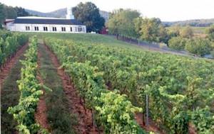 Wijnen van Zonin in Nederland - de wijngaard