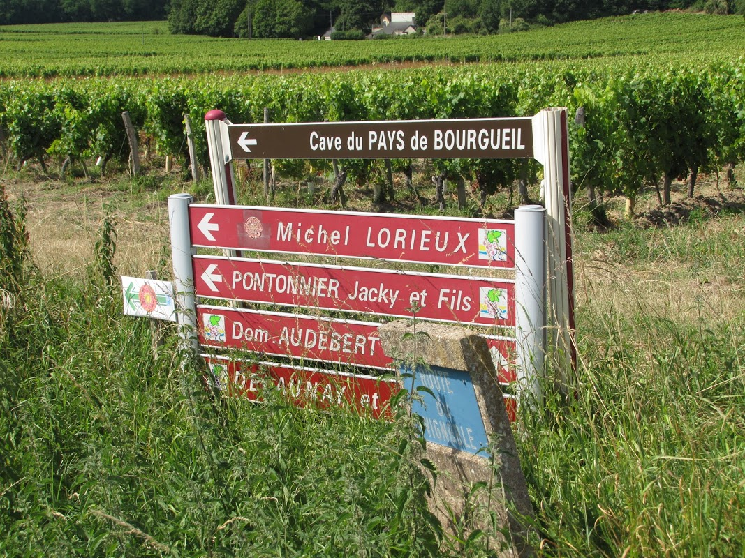 Blauwe druiven in het Loire dal
