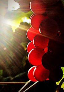 Beste wijnen van 2016 volgens Chris Kuhlman