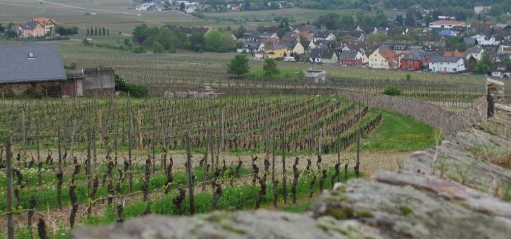 het-wijnjaar-in-duitsland-rond-de-rijn