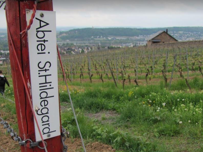 het-wijnjaar-in-duitsland-rond-de-rijn-wijngaard-abtei-st-hildegard