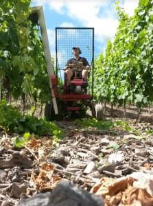 wijnoogst-zuid-duitsland-2016-stijle-wijngaarden-in-duitsland
