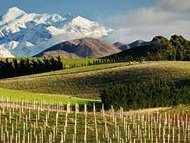 Vijf miljoen liter wijn weg