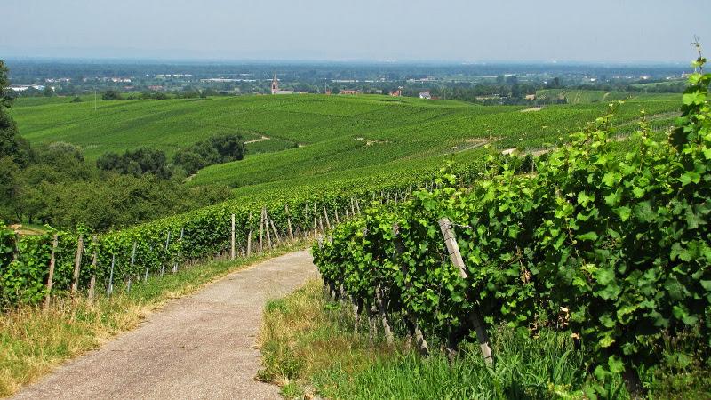 Duitse wijnen tijdens de Rieslingweken uitzicht Baden