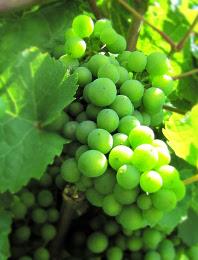 Duitse wijnen tijdens de Rieslingweken