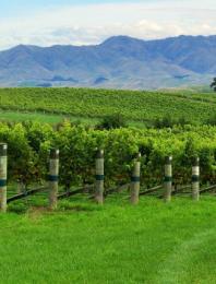 Yealands, een topmerk in Nieuw-Zeeland