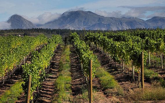 De wijnen van KWV in Zuid-Afrika, elgin