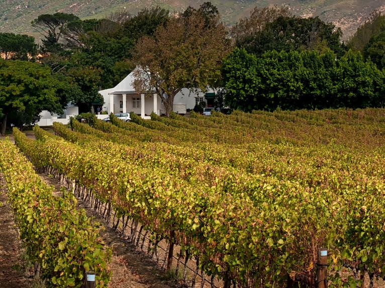 De wijnen van KWV in Zuid-Afrika, franschhoek