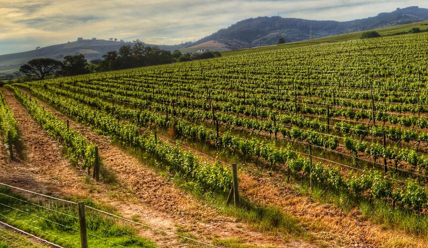 De wijnen van KWV in Zuid-Afrika, stellenbosch