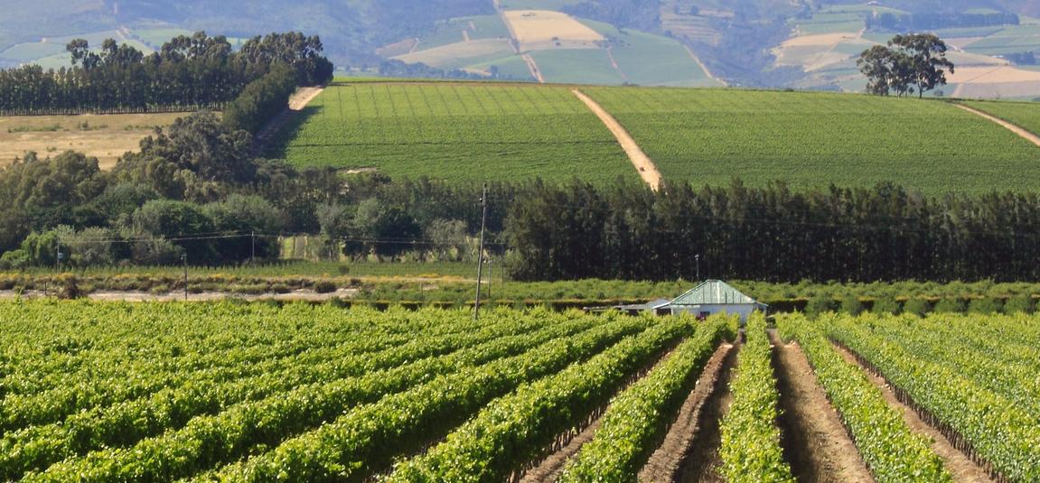 De wijnen van KWV in Zuid-Afrika, swartland