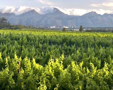 Wijn en wijngebieden in Zuid-Afrika uitgelegd