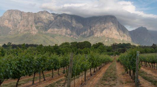 Wine of Origin Cape Town nieuwe herkomstbenaming Stellenbosch