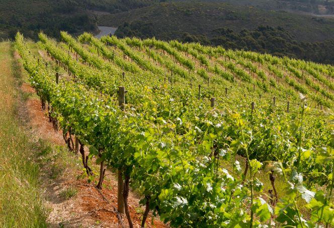 Wine of Origin Cape Town nieuwe herkomstbenaming
