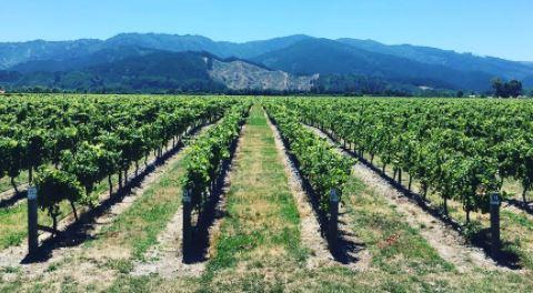 Alles over de wijnen van Nieuw Zeeland - de wijngaard