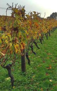Alles over de wijnen van Nieuw Zeeland - de wijnrank