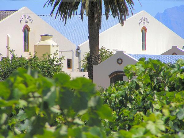 Alvi's Drift, van bulkwijn naar kwaliteitswijn farm met druiven