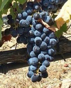 Gaat de prijs van wijn dit jaar omhoog