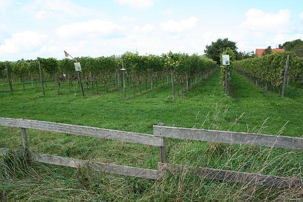 Wijngaard de Plack