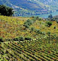 wijngebied Ribera del Duero - uitzicht de Duero