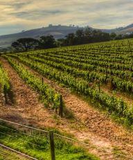 Zuid-Afrikaanse wijn fors duurder