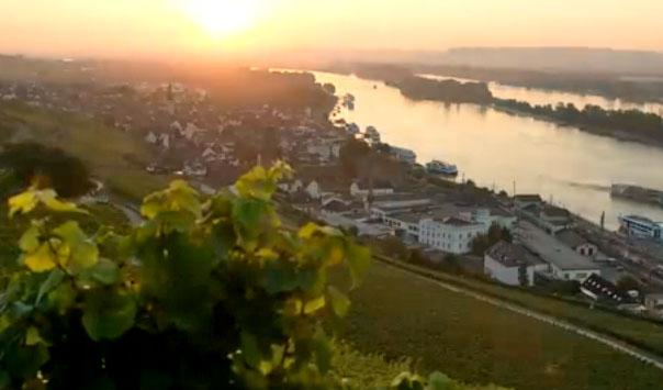 Duitse wijngaarden staan online. Uitzicht over de Rijn met wijngaarden