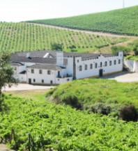 Douro wijngebied kent veel familiebedrijven