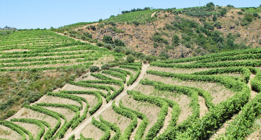 Kleine wijnboeren in het Douro wijngebied